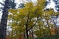 LSG Sudmerberg - Bäume (9).jpg