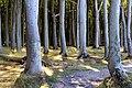 L 54a Kühlung - Gespensterwald bei Nienhagen (13).jpg