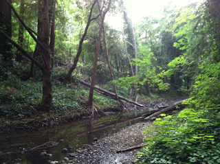 La Honda Creek
