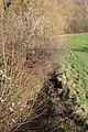 La mérantaise croisant la route de la butte aux chênes à Magny-les-Hameaux en février 2015 - 6.jpg