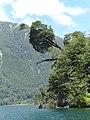 Lago todos los Santos - Petrohue - panoramio.jpg