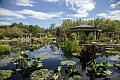 Lagoon at the Denver Botanic Gardens in Denver, Colorado LCCN2015633612.tif