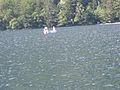 Lake Bohinj, Slovenia (4756960761).jpg