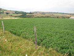 Landscape-IMG 7020.JPG