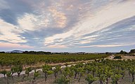 Landscape of vineyards, Castelnau-de-Guers cf03.jpg