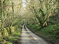 Lane to West Kington Wick - geograph.org.uk - 1231525.jpg