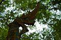 Laos - Luang Prabang 25b - Wat Chom Si dragon statues (6582064817).jpg