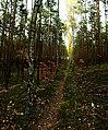 Leśna ścieżka - panoramio (2).jpg
