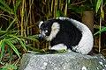 Lemur (36014728384).jpg