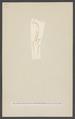 Lepisia - Print - Iconographia Zoologica - Special Collections University of Amsterdam - UBAINV0274 001 05 0040.tif