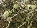 Lichen Display - geograph.org.uk - 1042576.jpg