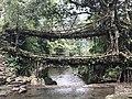 Living Root Bridge LUY LALKA.jpg