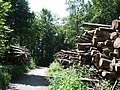 Logs drying in Felsenegg - panoramio.jpg