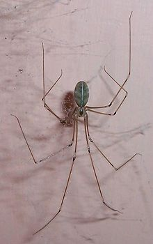 Long Legged Spider.jpg