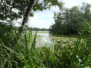 Lyngby Lake - Lake Lyngby