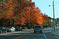 ME25 East - Portland Red Maple Trees (49245512647).jpg