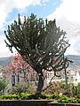 Madeira em Abril de 2011 IMG 1764 (5663209533).jpg