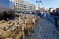 Madrid - XX fiesta de la trashumancia - 131006 105727-2.jpg