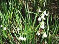 Magnolia Plantation and Gardens - Charleston, South Carolina (8556566218).jpg