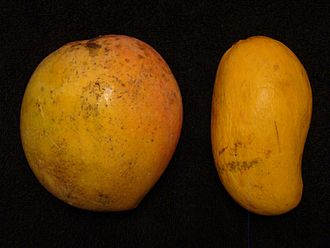 Bailey's Marvel - Comparison of Bailey's Marvel (left) with Ataulfo (right)