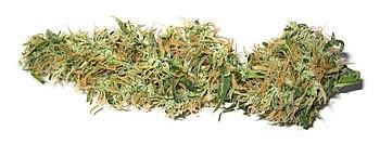 Dried marijuana bud.