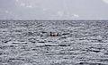 Markør i sjøen (8784325852).jpg