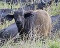 Masai Mara 690V0906 - Lip Kee.jpg