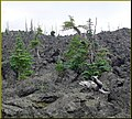 McKenzie Loop Drive, Lava Bed, OR 8-29-13j (10122756504).jpg