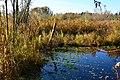 Mercer Slough Nature Park 04.jpg