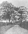 Mill Lane, Hazel Grove c.1901.jpg