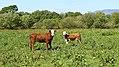 Milltown, Co. Kerry (506436) (26950739013).jpg
