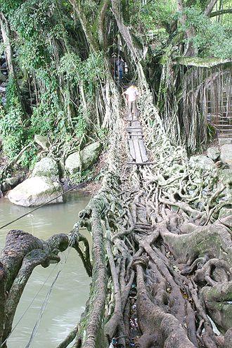 Painan - Jembatan akar, a tourist attraction near Painan