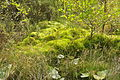Moss in Stover Country Park (6661).jpg