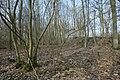 Motte op de Butsberg te Tielt-Winge - 372547 - onroerenderfgoed.jpg