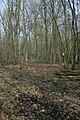 Motte op de Butsberg te Tielt-Winge - 372548 - onroerenderfgoed.jpg