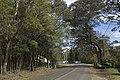 Mount Wilson NSW 2786, Australia - panoramio (26).jpg
