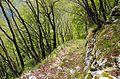 Mountainside trail.jpg