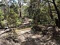 Mulloon fire trail in Tallaganda National Park, Palerang, New South Wales.jpg