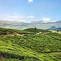 Munnar14,Kerala, India.jpg