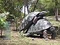 Mustique Turtle Sculpture - panoramio.jpg