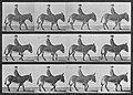 Muybridge, Eadweard - Jennie mit Reiter gehend (0.94 Sekunden) (Zeno Fotografie).jpg