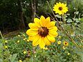NECTARING OF FLOWER.jpg