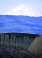 NRCSOR02010 - Oregon (5869)(NRCS Photo Gallery).tif