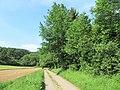 NSG-Lange Bäume 2.jpg