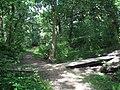 Nature Trail, Clinkham Wood - geograph.org.uk - 499383.jpg