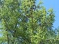 Nature in Smolensk - 33.jpg