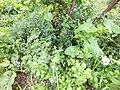 Nature of Latvia DSCF3401 - Flickr - davispuh.jpg