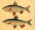 Naturgeschichte in Bildern mit erläuterndem Text (Taf. CXXXVI) (6059230168).jpg