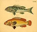 Naturgeschichte in Bildern mit erläuterndem Text (Taf. LXXVIII) (6058670355).jpg