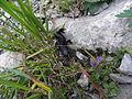 Naye-Abstieg-salamander 04.JPG